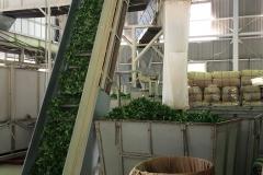 Japanese tea factory